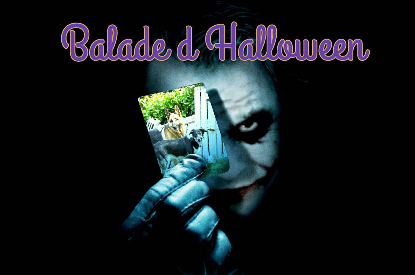 balade chien , haloween , ars canis