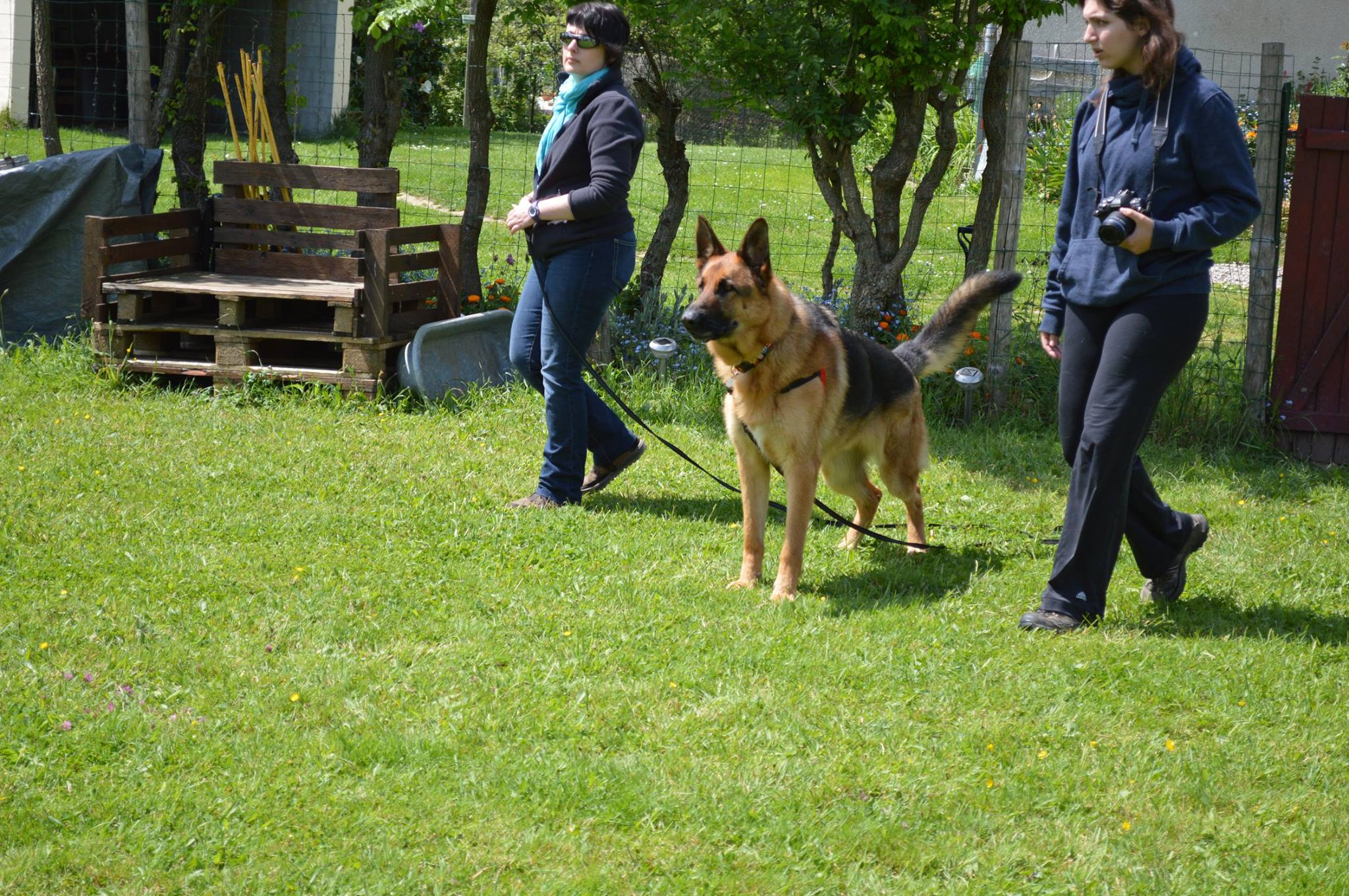 education canine 35 , ars canis image , dressage chien , berger allemand