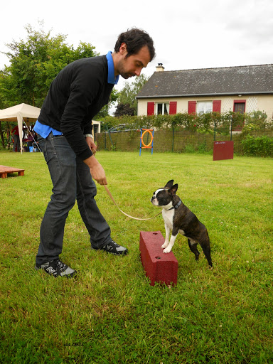 boston terrier education