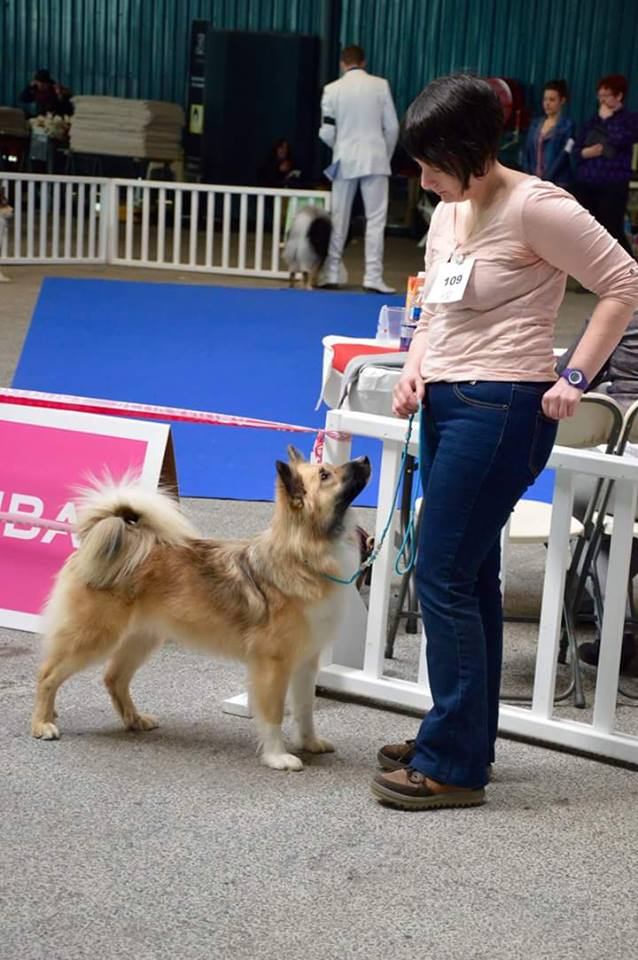 expo canine ,Ars Canis