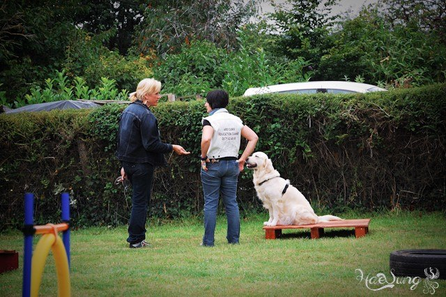 Cours d'education canine 35