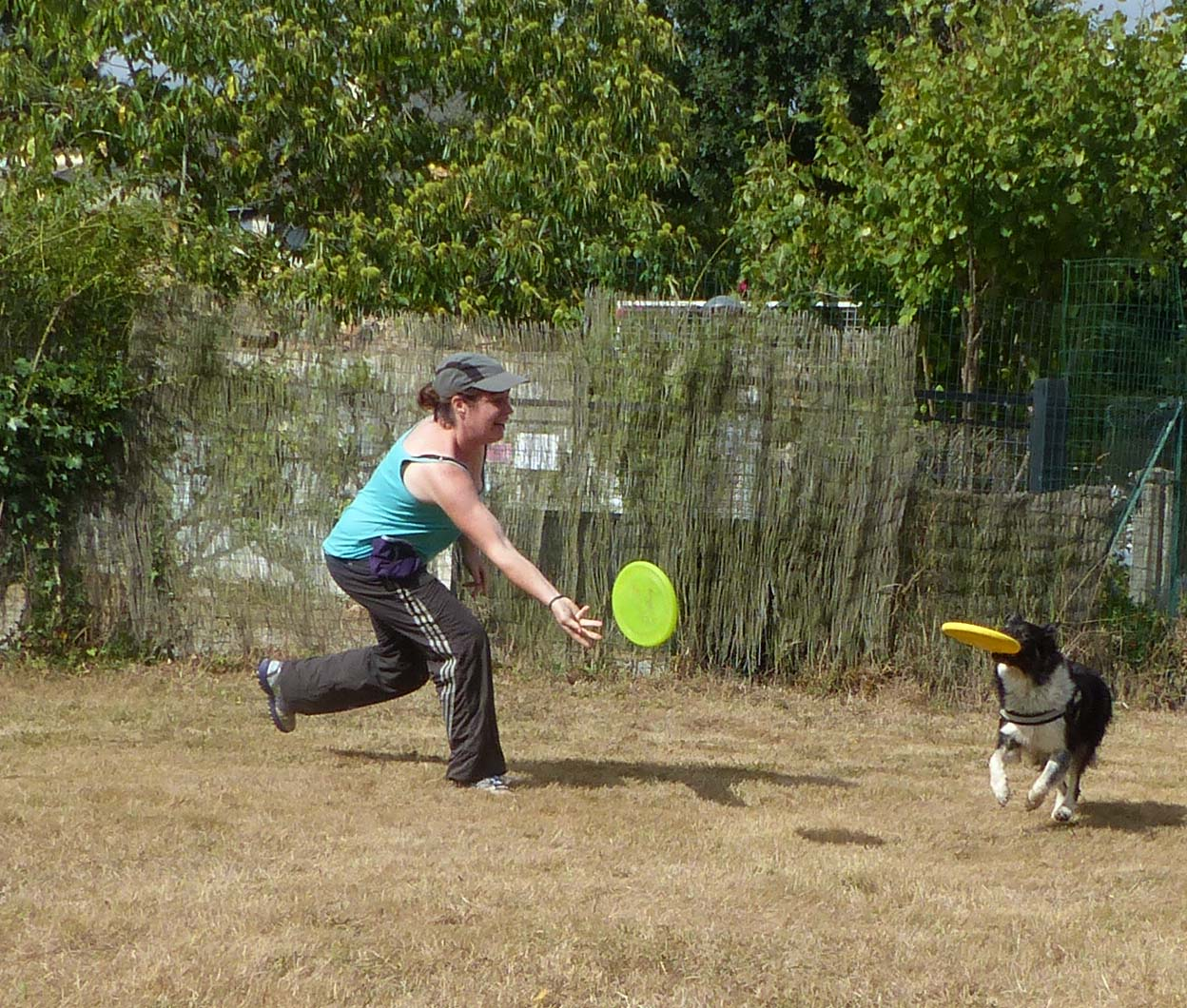 frisbee / ars canis image