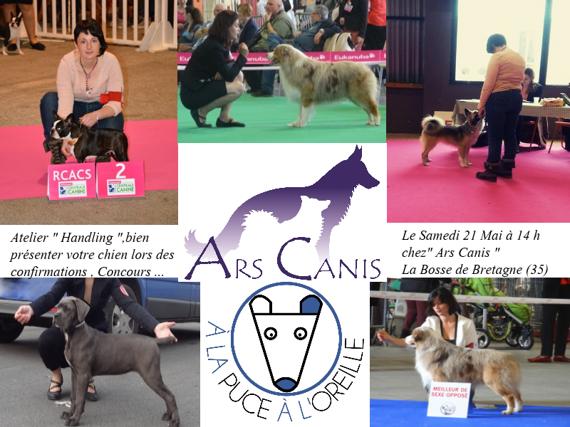 Handling , concours , image expo , ars canis , education canine 35