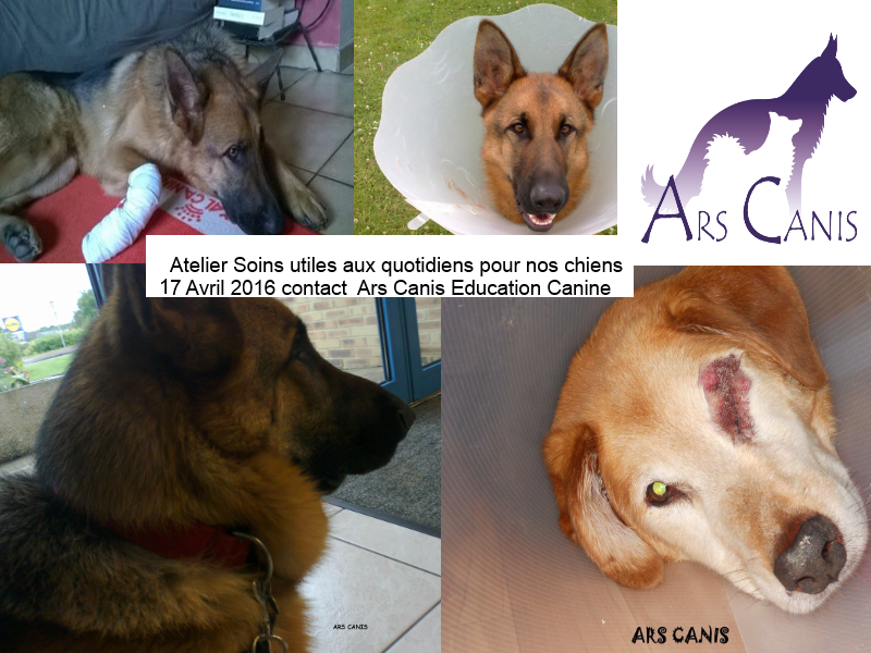 atelier soins pour chien , dog, ars canis